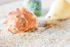 Shell lying in the sand. A sea shell lying in the sand on the beach Stock Photography