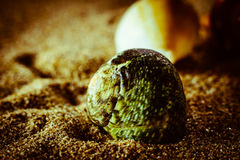 Shell lying in the sand. A sea shell lying in the sand on the beach Stock Image