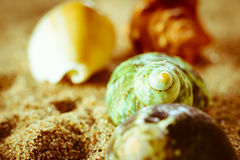 Shell lying in the sand. A sea shell lying in the sand on the beach Royalty Free Stock Photo