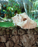 Shell. Lying on a stone fence in a tropical garden Royalty Free Stock Photography