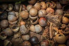 Shell Macadamia Lizenzfreie Stockfotografie