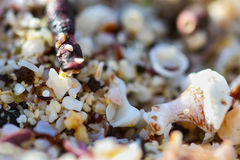 Shell macro do mar foto de stock