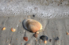 Shell Majesty. Shells with water foam at the beach Royalty Free Stock Photography