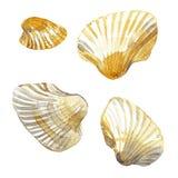 Shell malował akwarelę obraz stock