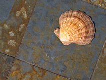 Shell on Marble Royalty Free Stock Images
