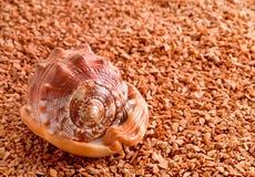 Shell marrón del molusco Foto de archivo