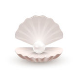Shell med pärlan inom, på vit Royaltyfri Foto