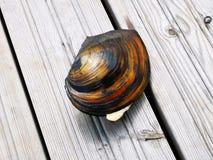 Shell-meer op houten vloer royalty-vrije stock fotografie