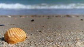 Shell-Meersandzeitlupeschönheit stock footage