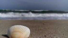 Shell-Meersandzeitlupeschönheits-Muschelsonnenlicht stock video
