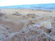 Shell Mer Plage images libres de droits
