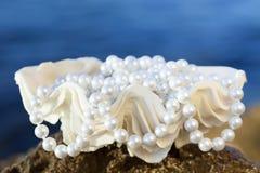 Shell met witte parels Stock Foto