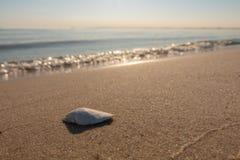 Shell miente en la playa del mar Báltico fotos de archivo