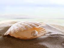 Shell mit einer Perle Stockfoto