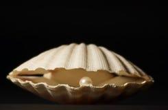 Shell mit Perle Stockbild
