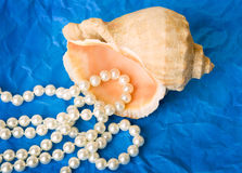 Shell mit Perlenkornen Stockfotografie