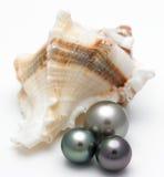 Shell mit schwarzen Perlen stockfoto