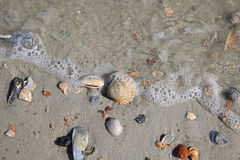 Shell Mix. Shells with water foam at the beach Royalty Free Stock Photo