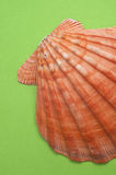 Shell on Modern Vibrant Green Royalty Free Stock Photo