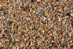 Shell molhados do mar e seixos pequenos em uma praia Imagem de Stock