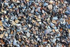 Shell molhados do mar e seixos pequenos em uma praia Foto de Stock Royalty Free