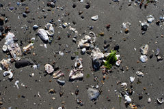 Shell molhados pequenos no Sandy Beach Foto de Stock Royalty Free