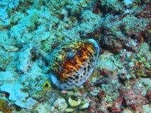 Shell mollusc Stock Photos