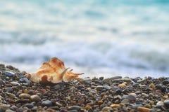 Shell mollusk kłama na otoczak plaży na tle morze Obraz Royalty Free