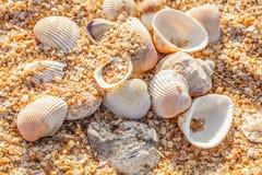 Shell molluskar på stranden Arkivfoton