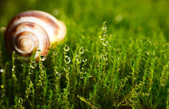 Shell in moss Royalty Free Stock Images