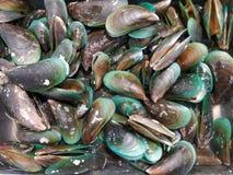 Shell, moules vertes photos libres de droits