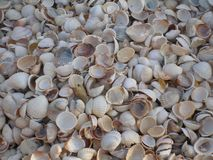 Shell mound Stock Photography