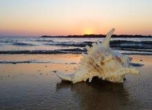 Shell Murex på strandsolnedgången arkivbild