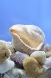 Shell musslahus Arkivfoton