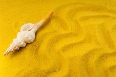 Shell na żółtym piasku Obraz Royalty Free