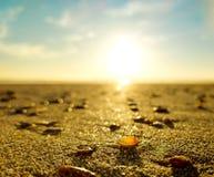 Shell na areia da praia com o sol no fundo imagem de stock royalty free