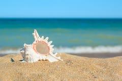 Shell na areia no lado de mar Imagens de Stock Royalty Free