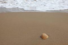 Shell na piaskowatej plaży Fotografia Royalty Free