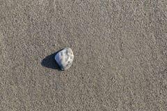 Shell na piasku Fotografia Royalty Free