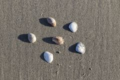 Shell na piasku Obraz Stock