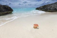 Shell na piasku wyrzucać na brzeg Zdjęcia Royalty Free