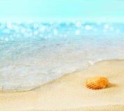 Shell na plaży Obraz Royalty Free