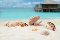 Shell na plaży Zdjęcia Stock
