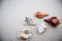 Shell na plaży Obraz Stock