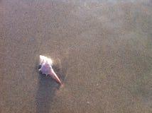 Shell na plaży Fotografia Royalty Free