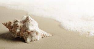 Shell na plaży Obrazy Stock