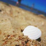 Shell na plaży Fotografia Stock
