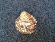 Shell na plaży Vancouver wyspa fotografia royalty free