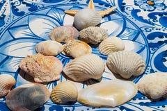 Shell na placa Imagens de Stock Royalty Free