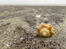 Shell na praia fotografia de stock